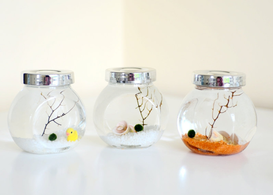 Aqua Terrarium With Marimo Moss Ball And Seashell