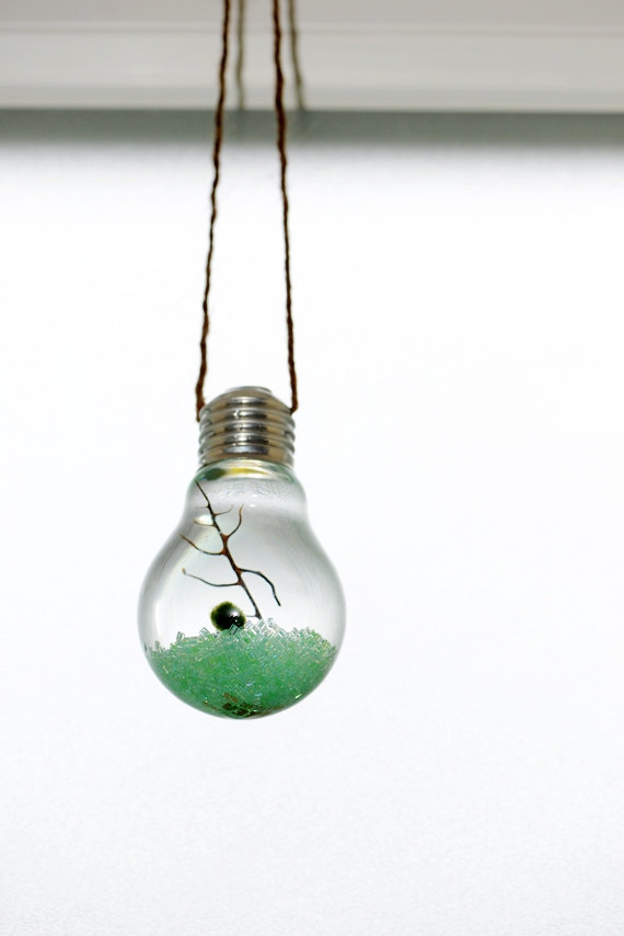 Marimo Moss Ball Light Bulb Hanging Terrariums