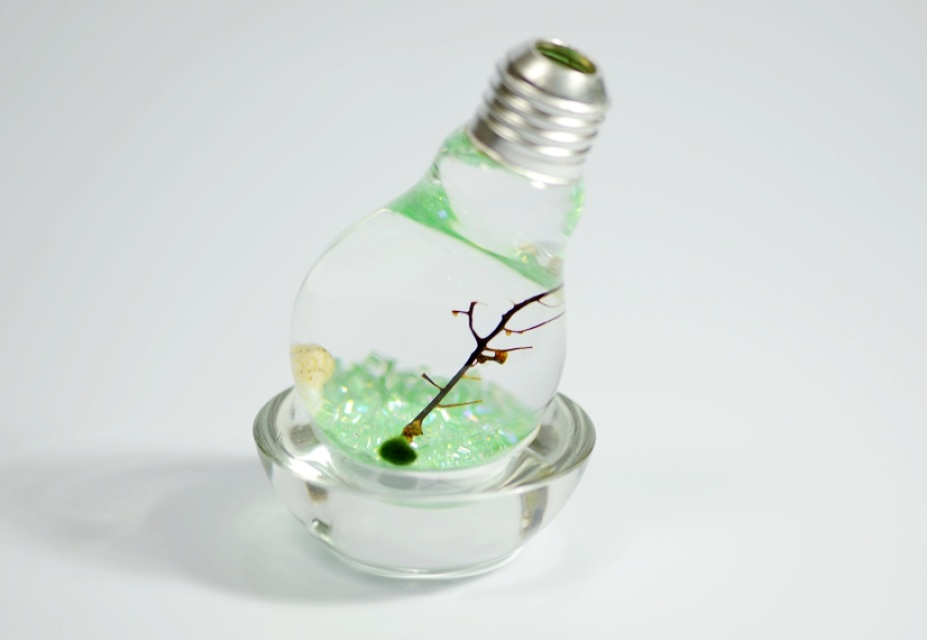 Green Marimo Moss Ball Light Bulb Terrariums